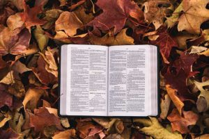 Bible Trivia Leaves